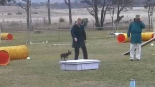 """Agility Min Pin """"lea"""" In Ad In Canberra, May 08"""