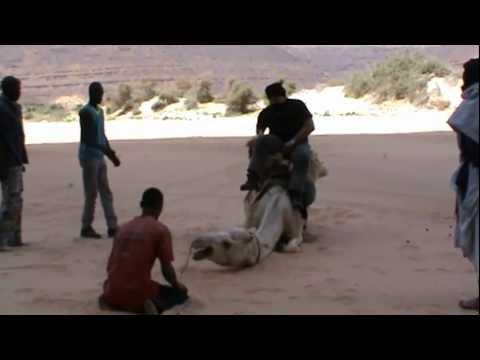 GAMELLE chameau dans le désert Mauritanien, attention exceptionnel !