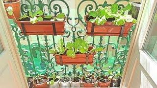 🌿🌱🍃 Mi huerto urbano en casa 🍃🥬🌱 | Huerto en macetas | El Dulce Paladar