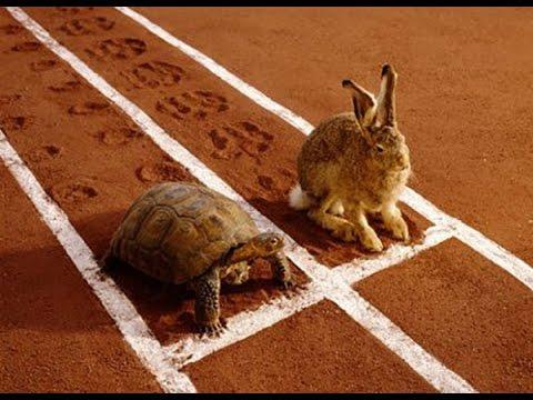 Thỏ và rùa – Thỏ và rùa thi chạy – Truyện ngụ ngôn – truyện cổ tích hay nhất cho bé