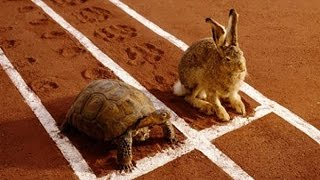 Thỏ và rùa - Thỏ và rùa thi chạy - Truyện ngụ ngôn - truyện cổ tích hay nhất cho bé