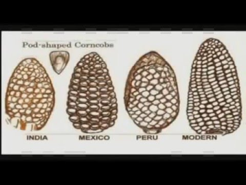 Ancient Mystery of AMERICAN CORN MAIZE In Babylon & Egypt / Gunnar Thompson
