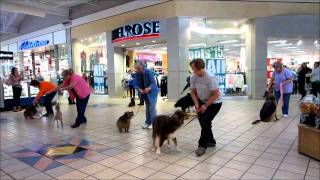National Train Your Dog Month Flash Mob