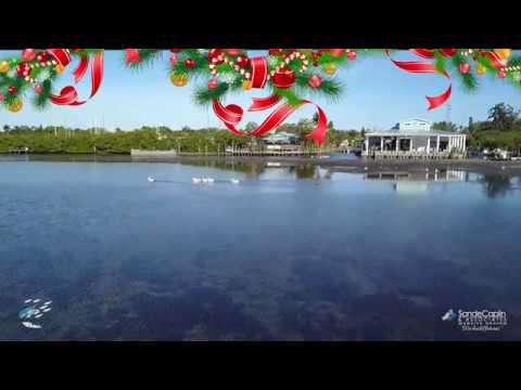 White Pelicans At The Swordfish Grill & Tiki In Cortez, Florida