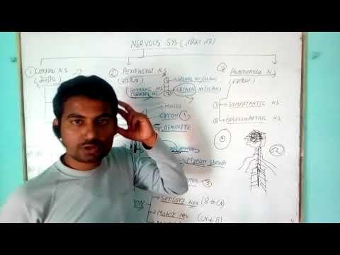 Nervous system(general science)/Biology gk Tricks/how nervous system works/importance of nervous sys