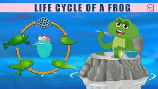 Life Cycle Of A FROG! - The Dr. Binocs Show | Best Learning Videos For Kids | Peekaboo Kidz
