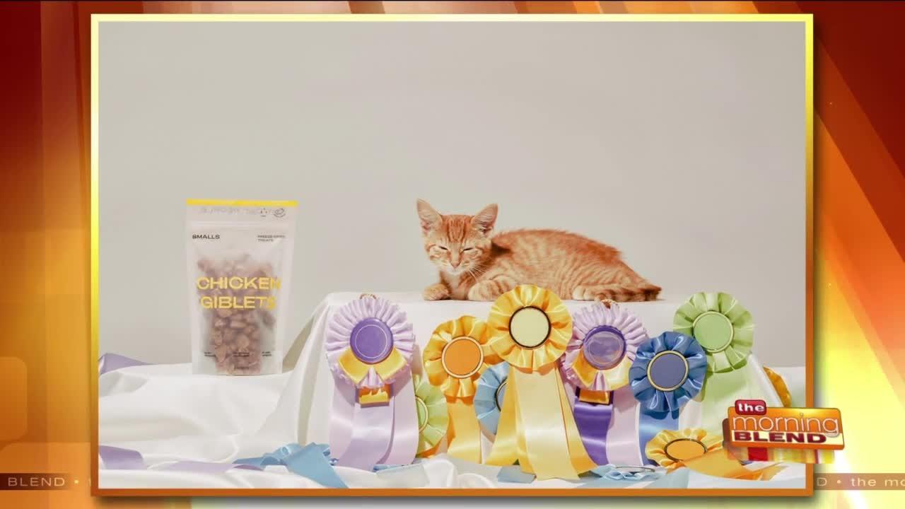 Celebrating National Cat Day