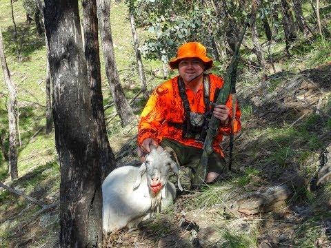 Wild goat hunting in NE Victoria Australia
