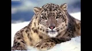 10 Самые красивые животные в мире.....