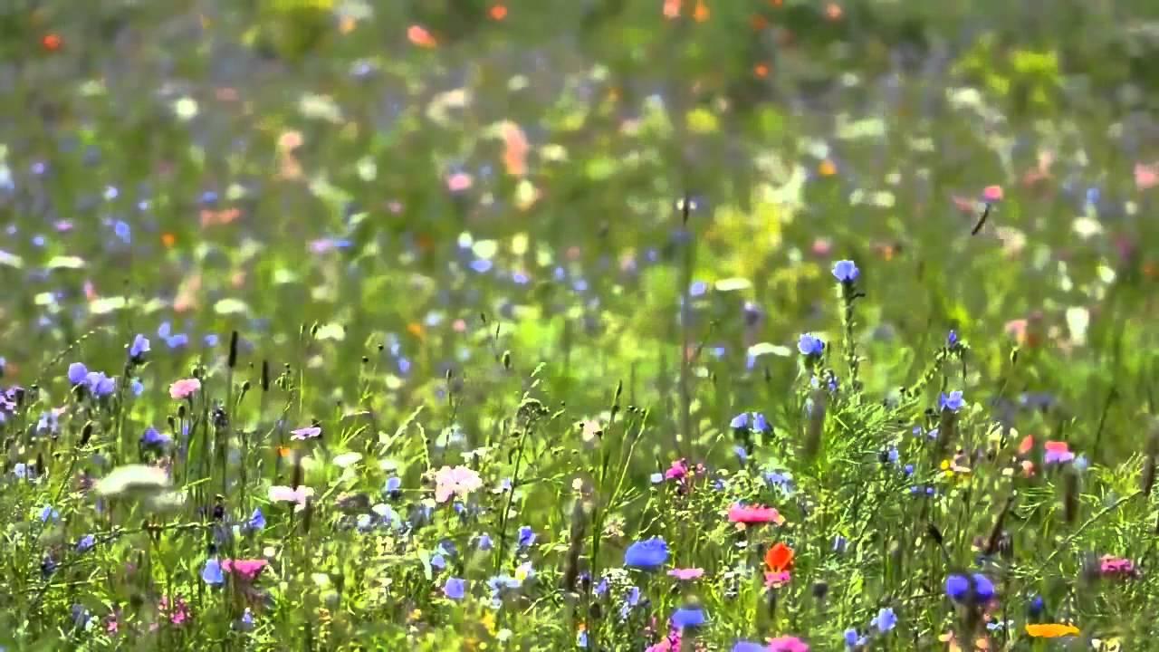 Фон полевые цветы