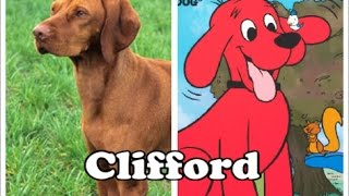 6 Things You DIDN'T Know About Clifford the Big Red Dog