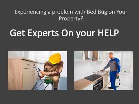 Grand Rapids Bed Bug Exterminator – Bed bugs Removal Service in Grand Rapids