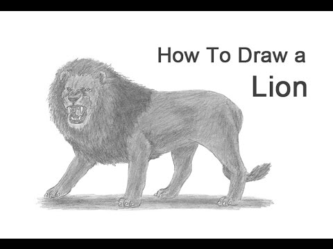 How To Draw A Lion Roaring Youtube