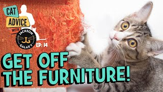 Get Off The Furniture: Can you set limits with your cat?