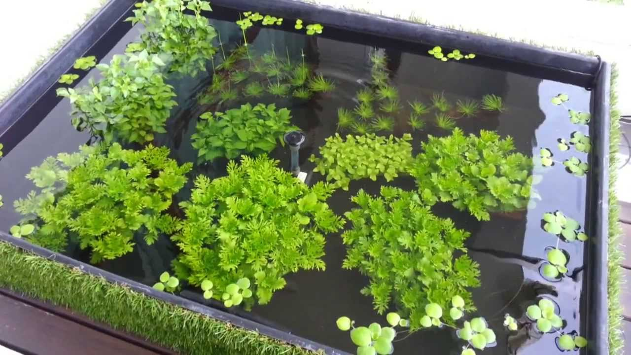 Urban aquaria 108 litre puddle garden outdoor balcony for Balcony koi pond