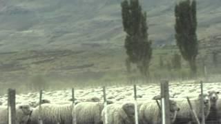La PATAGONIE ses élevage de moutons