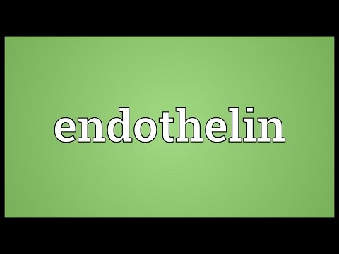 Endothelin Meaning