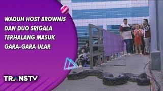 BROWNIS - Waduh Host Brownis Dan Duo Srigala Terhalang Masuk Gara-Gara Ular (22/8/19) Part 1