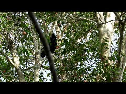 Видео: crow and wagtails