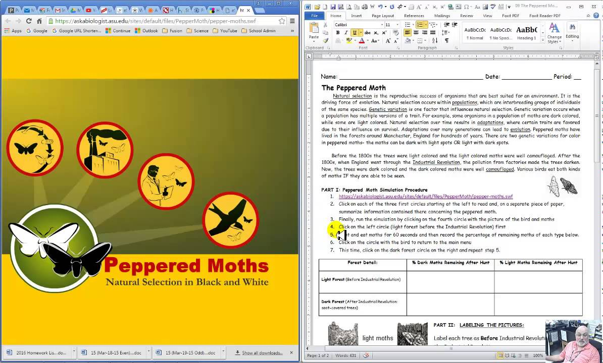 Peppered Moth Simulation Graphing swf - YouTube