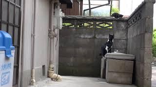 2018年 白黒ちゃん 53 (白黒ちゃん流子育て法 後編 ) thumbnail