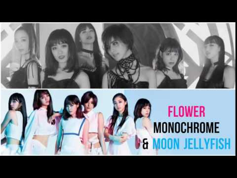 Flower - Monochrome & Moon Jellyfish PV's [Kanji|Rom|Eng] HD (see Description)