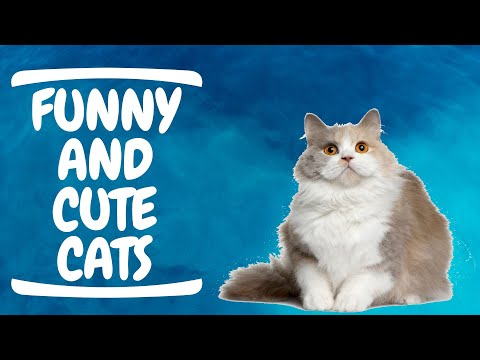 Baby Cats - Funny and Cute Cat Videos Compilation #17