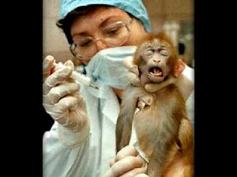 a research on the need for animal experimentation The future of research is lending itself to being more humane and more  we  simply do not need to continue testing on animals, and here are.