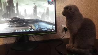 кот залип в живые обои
