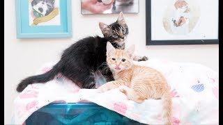 LIVE: Hank and Kodiak's Adoption Party! thumbnail