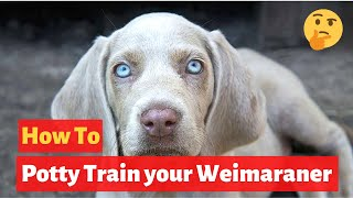 How to easily house train Weimaraners? Effective Training tips