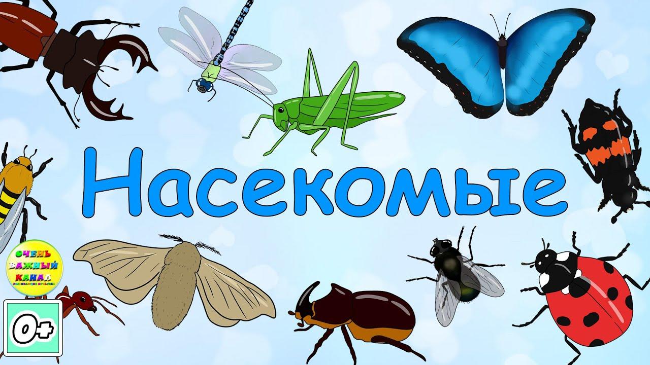 Учим насекомых. Развивающий мультфильм