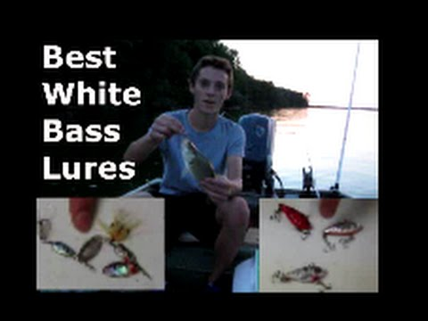 Best Lures For White Bass Fishing And Tips: How To (aka Sand / Silver Bass)