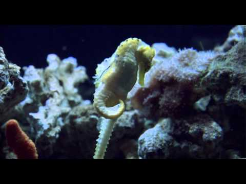 wildaid-cut-save-our-seahorses,-the-seahorse-trust