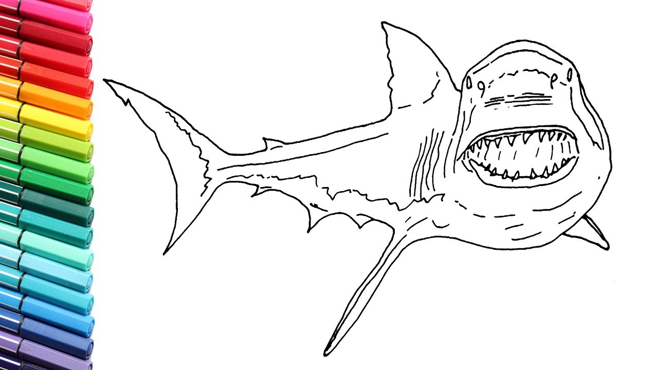 how to draw the great white shark  sea monster shark