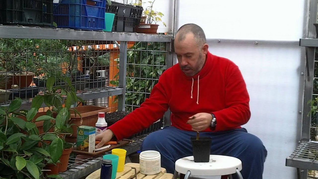 Como reproducir arboles y arbustos por esqueje 2014 youtube - Limonero en maceta ...