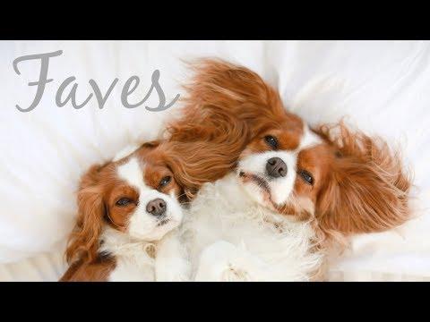 CURRENT FAVORITES |Dog accessories, dog food, dog treats