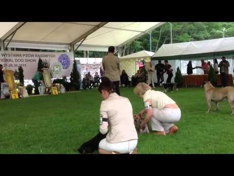 Питомник Мари Бижу-профессиональный племенной питомник