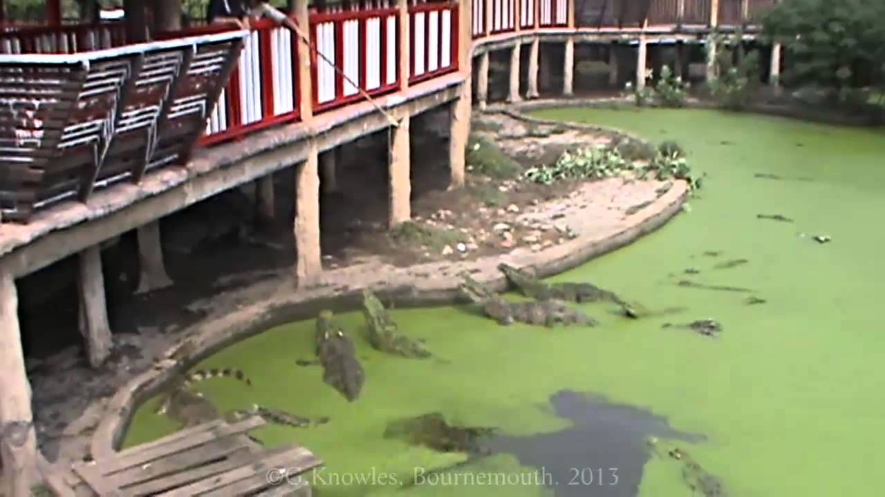 Thought You Have Seen It All! Know About The Largest Crocodile Farms In Thailand That Will Surely Amaze You 1