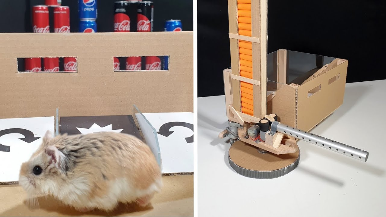 Major Hamster Uses His New Awesome Toy Youtube
