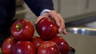 Canadian apple breeder creates new out of this world apple