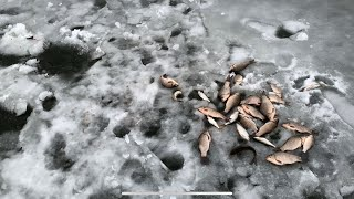 Ловим карася со льда на Межуре