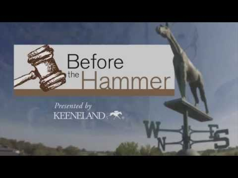 Before The Hammer: Hunter Valley Farm