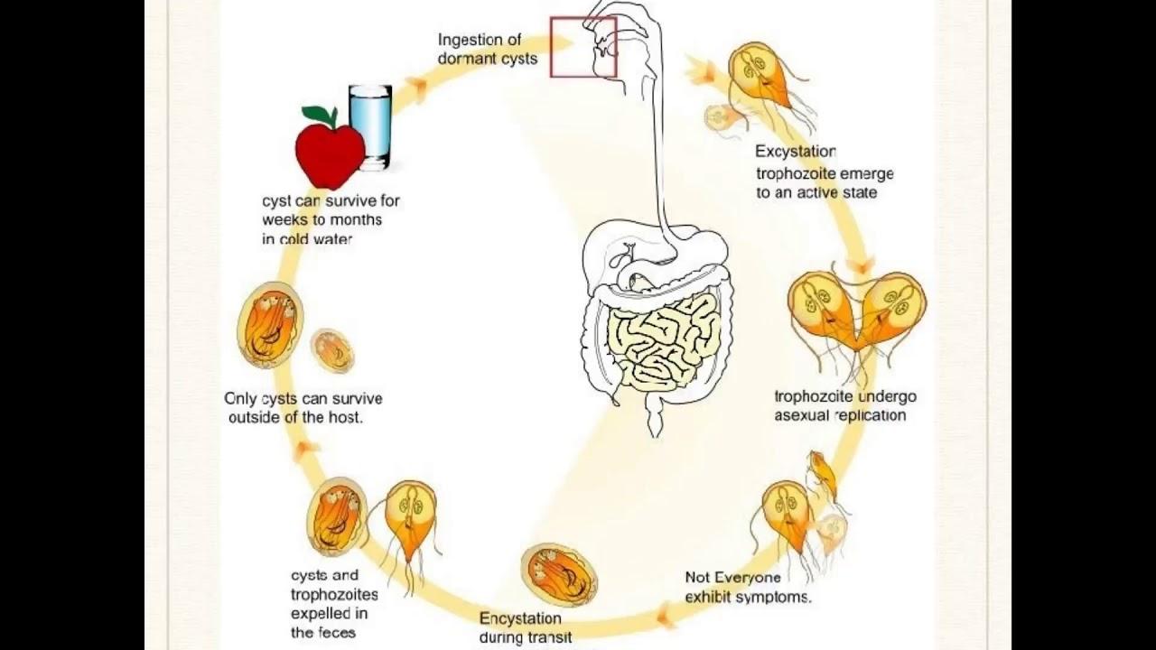 légzési papillomatosis prognózis hasnyálmirigyrák elleni oltások