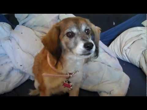 Smart dog says I LOVE YOU