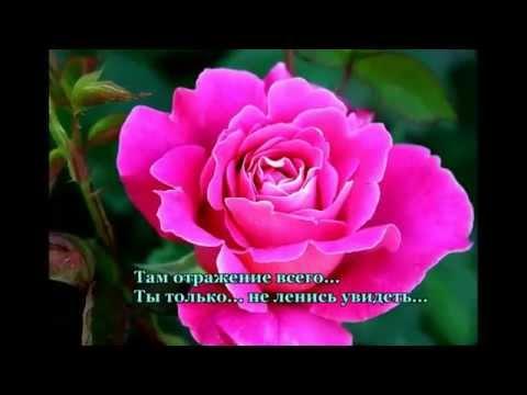 Стишки к фото о цветах