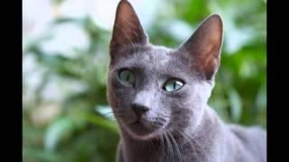 Como Cães e Gatos 3 - A Múmia Gato
