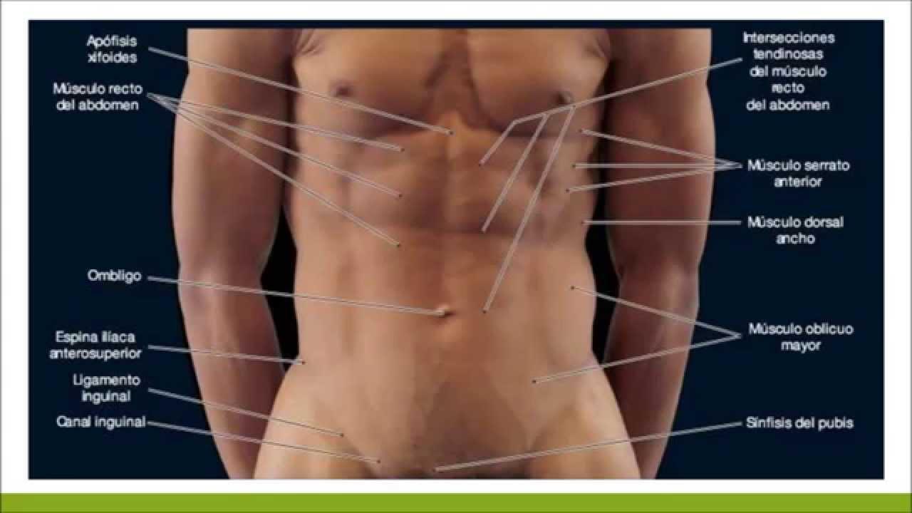 Anatomia de superficie - YouTube