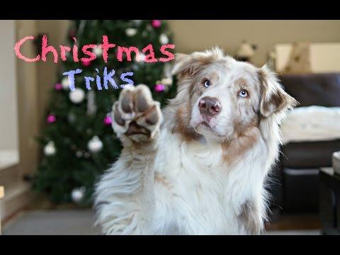 Christmas Tricks || Aiko berger australien