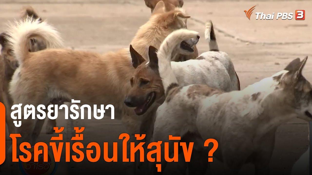 สูตรยารักษาโรคขี้เรื้อนให้สุนัข ? : ชัวร์หรือมั่ว (4 ก.พ. 64)